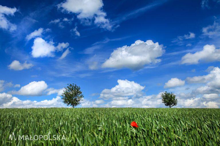 dzień czystego powietrza Nasze Powietrze