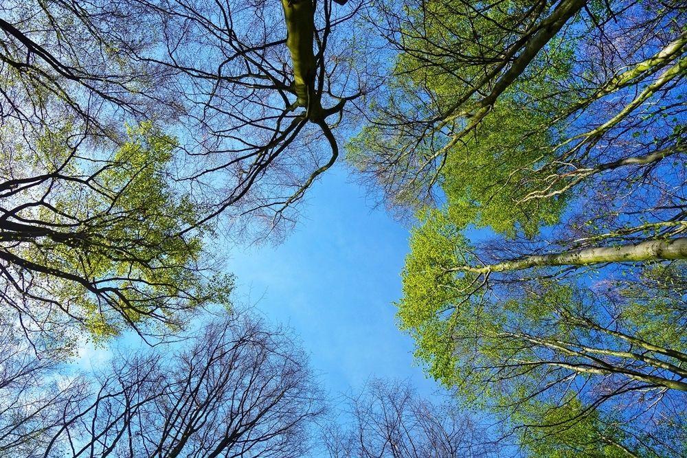 tree 3353617 1920